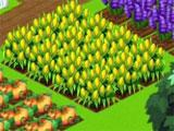 My Happy Farm Daily: Managing the Crops