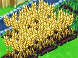 Farm All Day: Growing Wheat