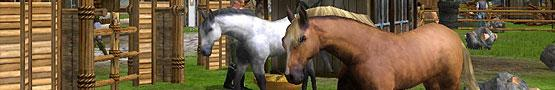 Giochi di Cavalli Online - The Majestic Creatures in Horses