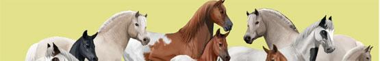 Онлайн игры Лошади - Why Horse Breeding Games are Amazing