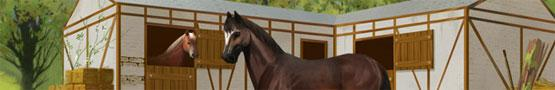 Giochi di Cavalli Online - Three Horse Breeds Recommended for Beginners