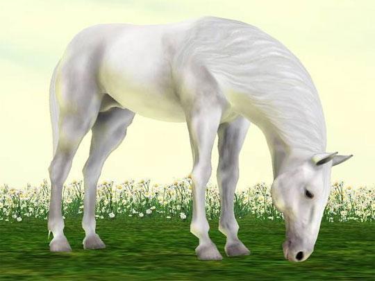 Beautiful Stallion from IMVU