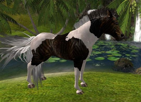 Beautiful Pinto from Second Life