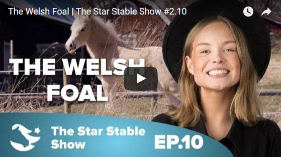 Welsh Ponies Come to Star Stable