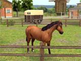 HorseWorld: Show Jumping gameplay