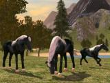 Family of horses in Horse Family Simulator