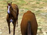 Making a Herd in Horse Survival Simulator 3D