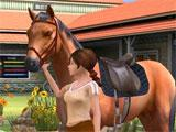 My Horse and Me: Taking your horse out for a walk