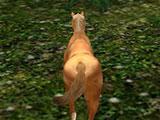 Life of Horse - Wild Simulator: Finding food