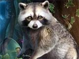 Dark Dimensions: Vengeful Beauty Collector's Edition Raccoon