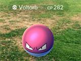 Voltorb spotted in Pokemon Go