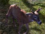Deer Hunter 2014 White-Tail Deer