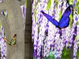 NuVera Online Garden