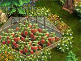 Image Alt Crops